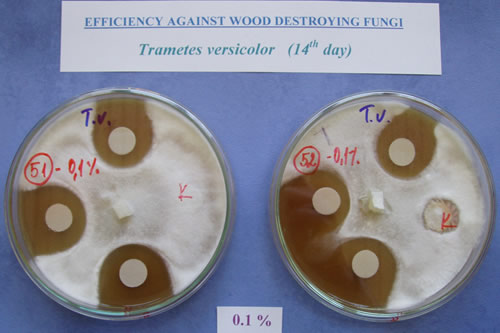 Laboratory decay agar plate screening test.