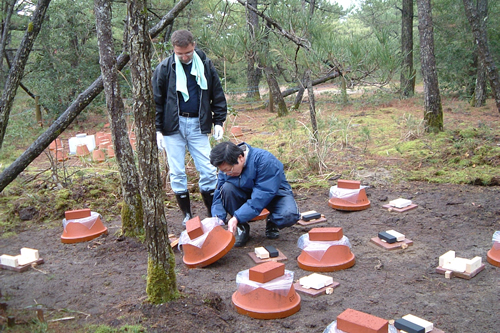 Nami Kartal and Yuji Imamura at the Kagoshima termite site.